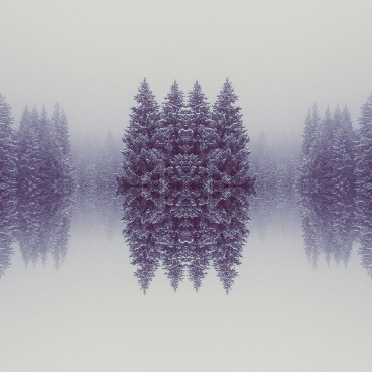 DigitalAnthill_Mirrored00009